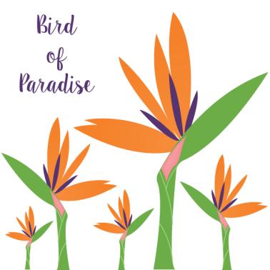 BirdofParadise
