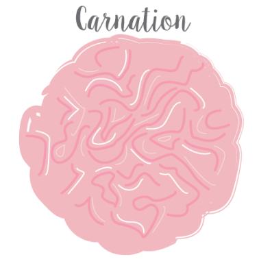 Carnation_MalloryHazel